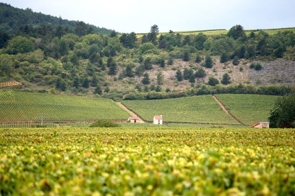 Burgundy France Wine Region / Megan Mallen / CC BY 2.0 via Flickr