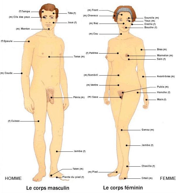 corps body